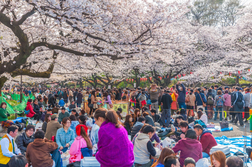 Is Hanami in Japan Actually All That Fun? - GaijinPot