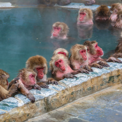 Snow monkeys in Nagano