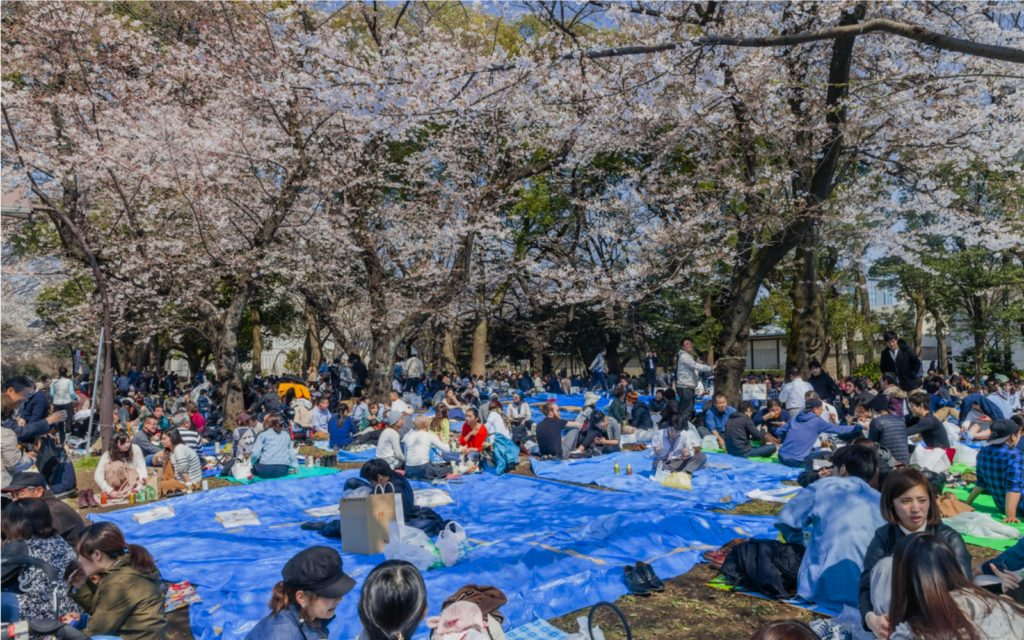 Cherry Blossom Season has started in Tokyo 2019