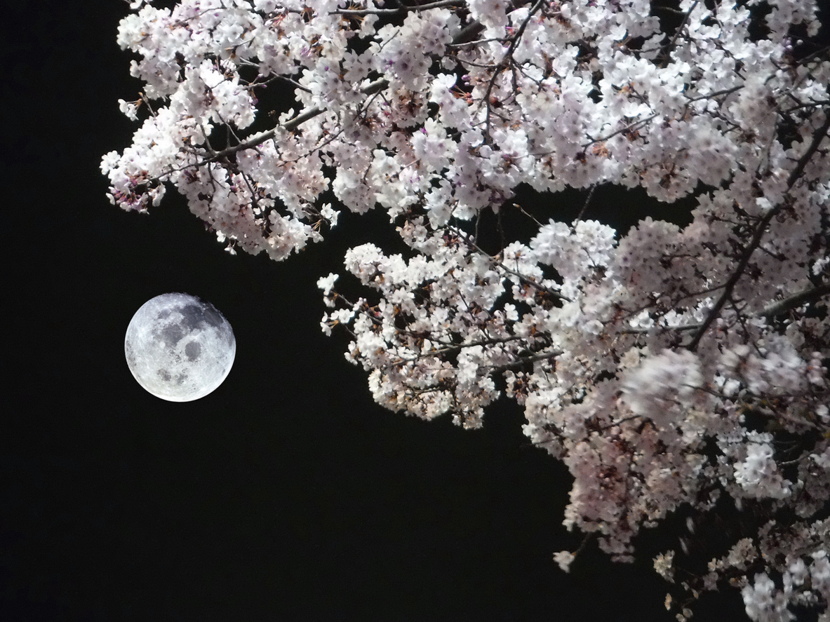 Persevering Through Covid 19 What We Can Learn From Japan S