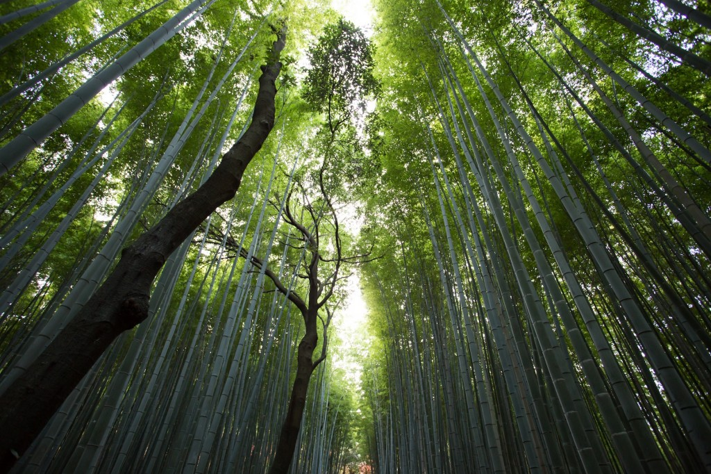Walk among the mystical bamboo groves at Arashiyama