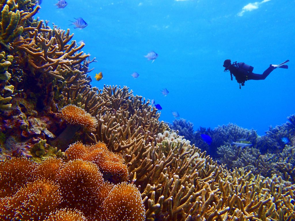 A scuba diver exploring the coral in Okinawa
