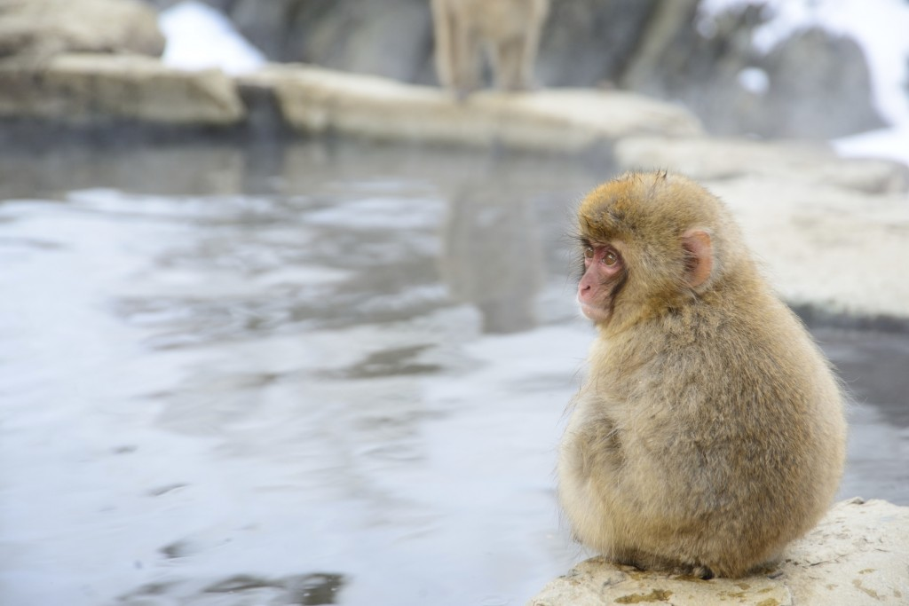 Top 10 cultural experiences in Japan: onsen