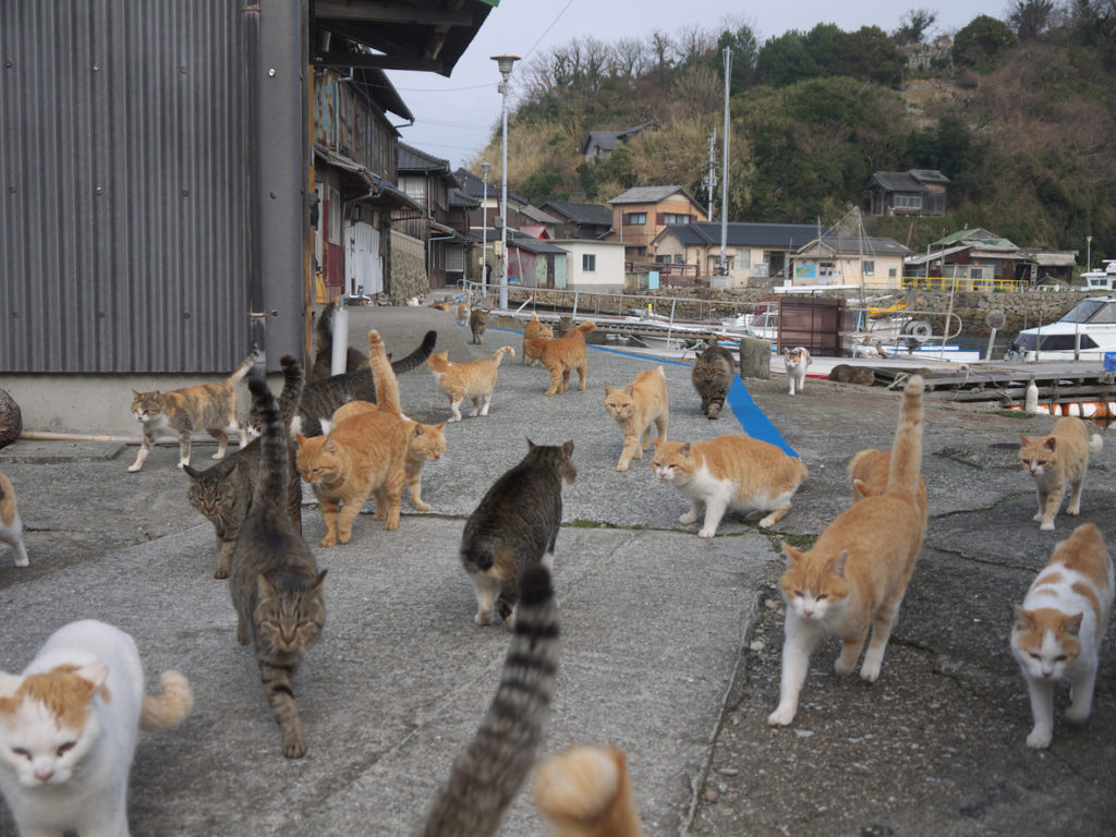 Aoshima cat island in Ehime, Japan.