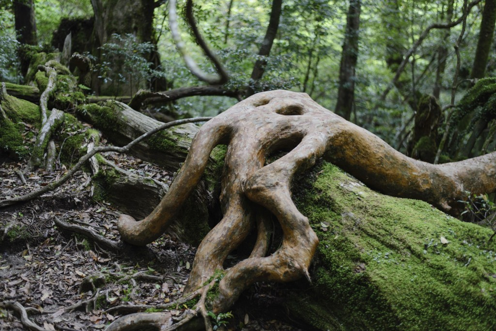 The incredible Yakushima forest was the inspiration for Miyazaki's Princess Mononoke.