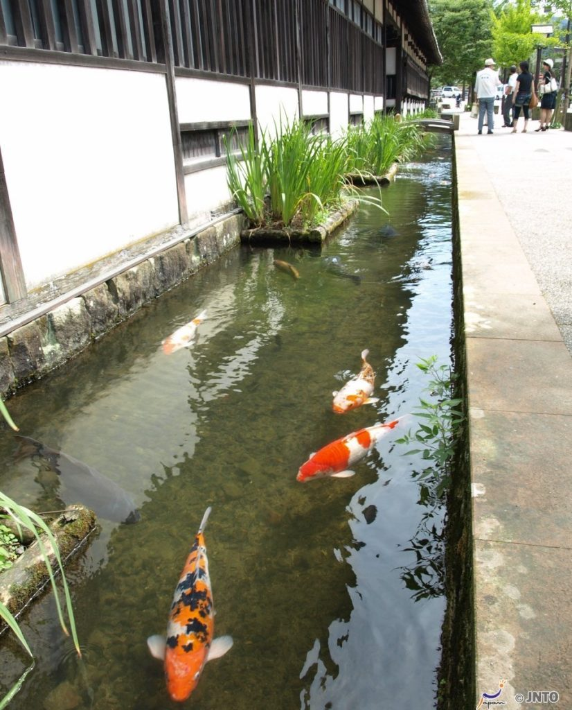 Carp-filled canals in Tsuwano, Shimane Japan