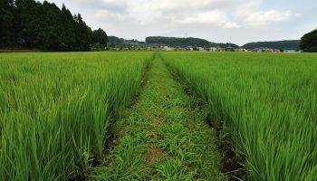Fukushima (Shirakawa)