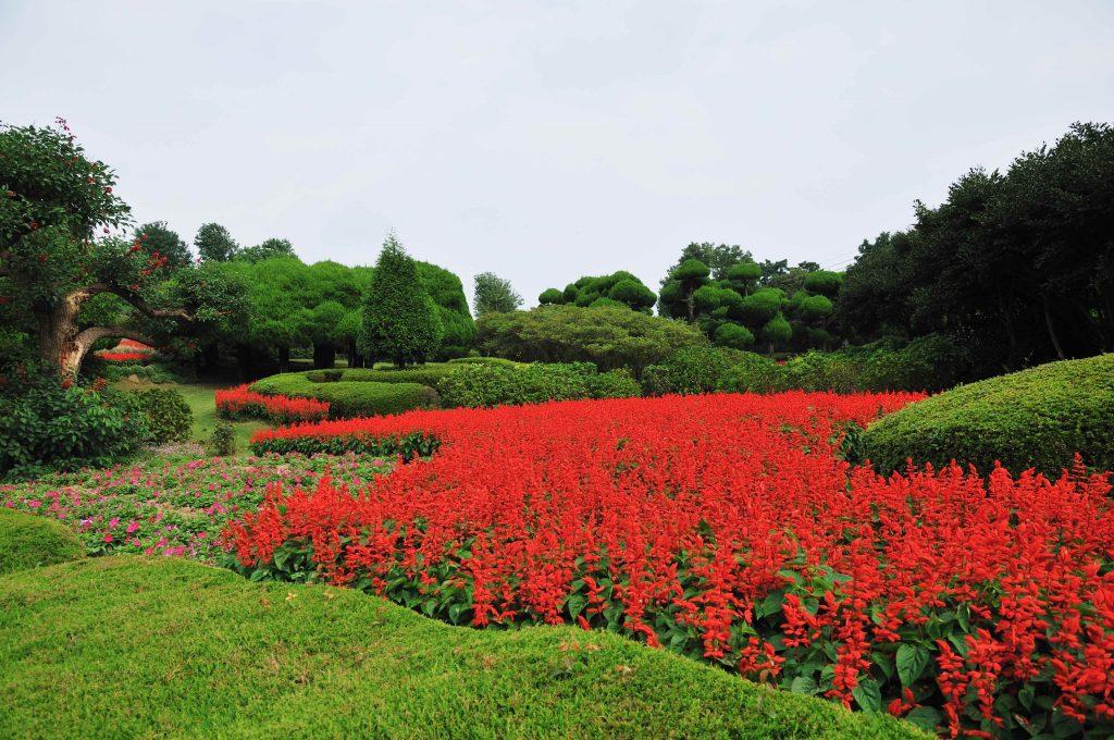 Flowers at Nokonoshima Island Park