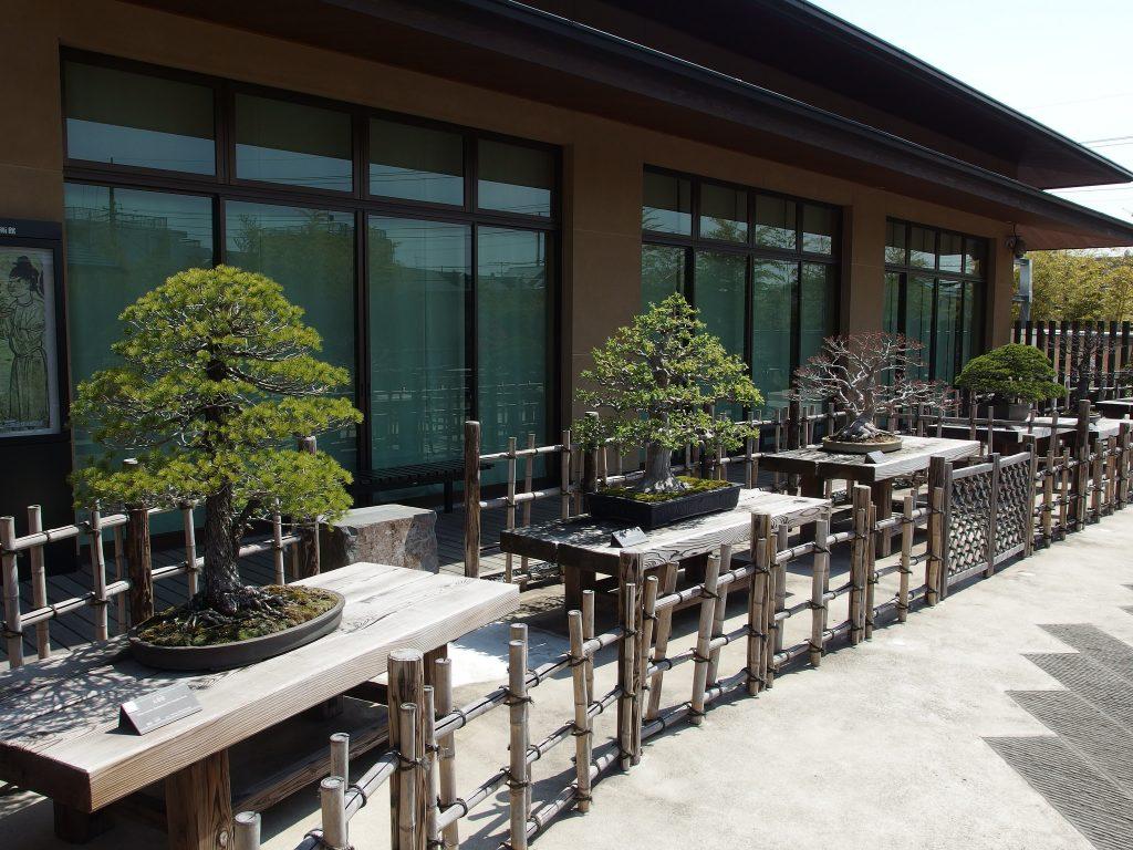 Bonsai on display at the Omiya Bonsai Art Museum.