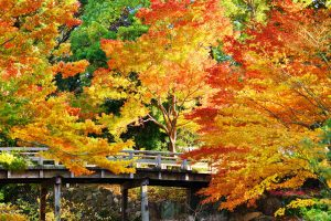 Autumn leaves at Tokugawa gardens Nagoya