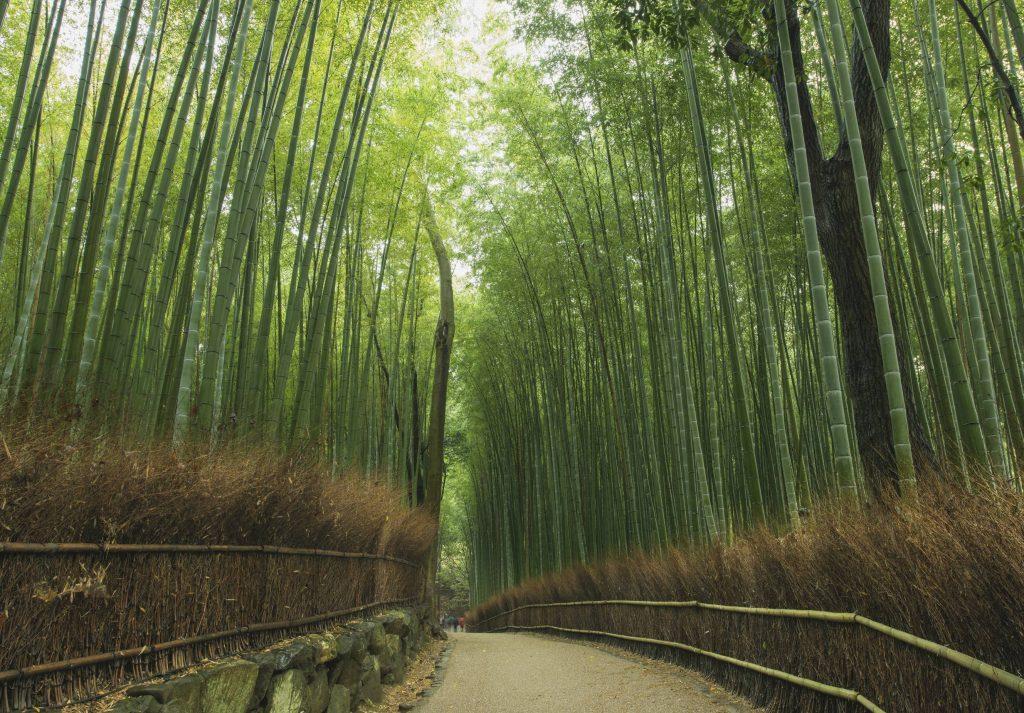Arashiyama Bamboo Grove Gaijinpot Travel