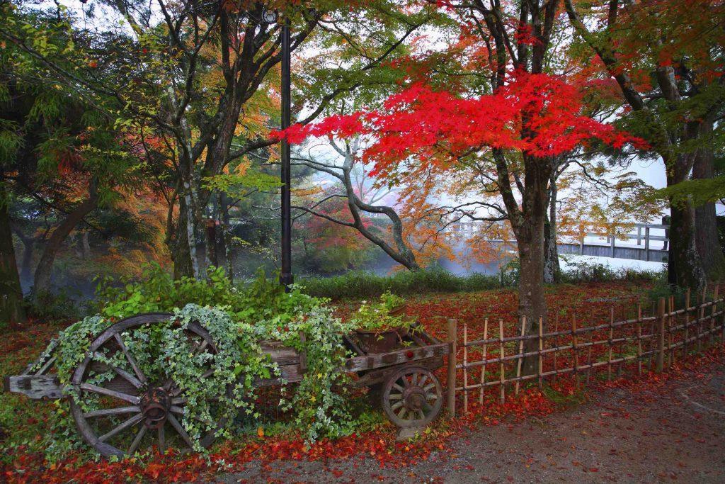 Yufuin autumn leaves