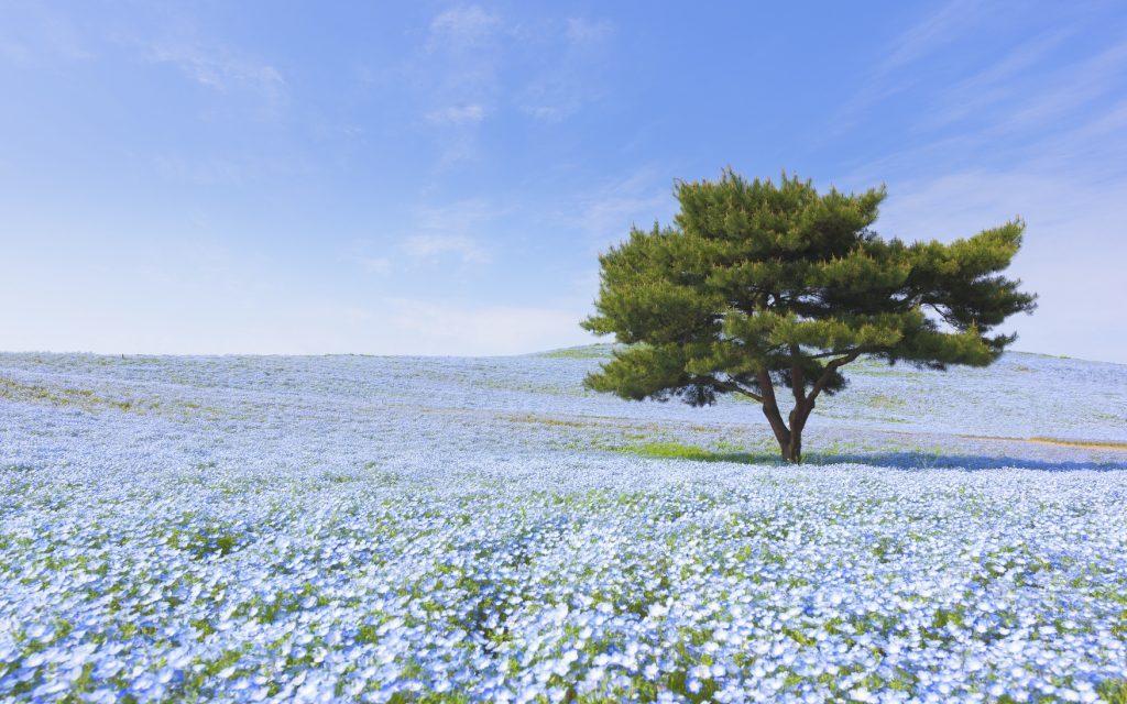 Hitachi Seaside Park - GaijinPot Travel