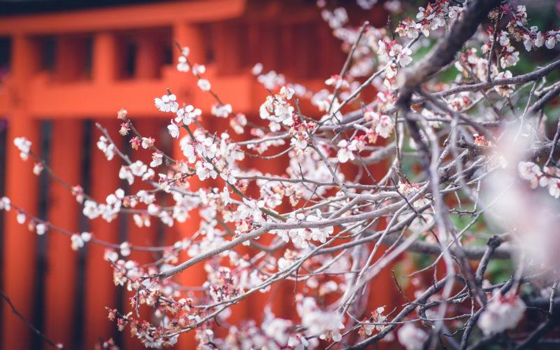 Risultati immagini per kyoto nara landscape 800x500