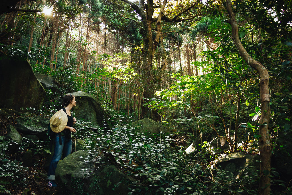 Mikura Island, Izu Islands