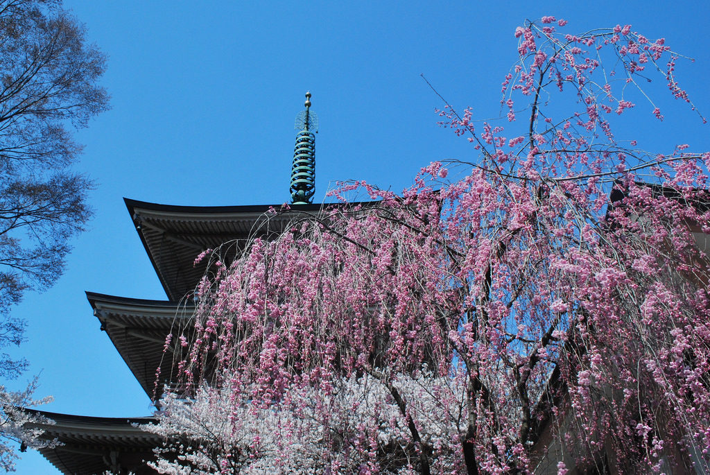 zenkoji pagoda