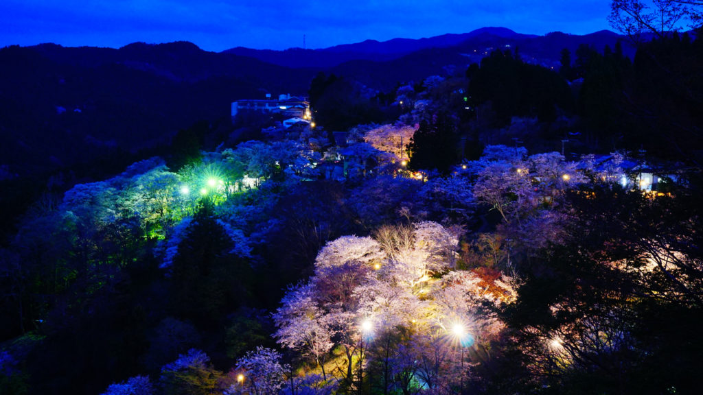 Mount Yoshino Cherry Blossom light up in Nara