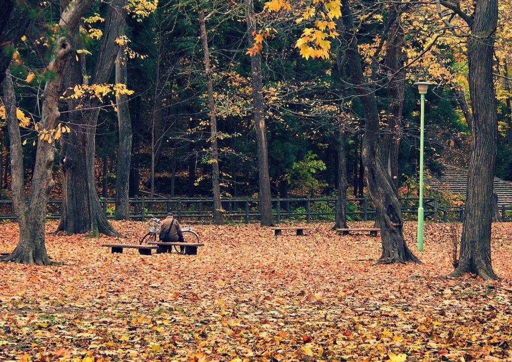 Maruyama Park in autumn