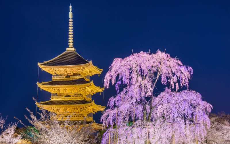 Toji Temple at night and cherry blossoms in Kyoto, Japan