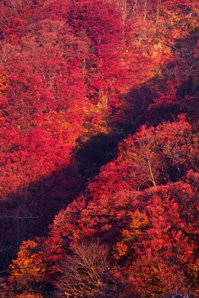 Shirakami-Sanchi in Aomori Prefecture