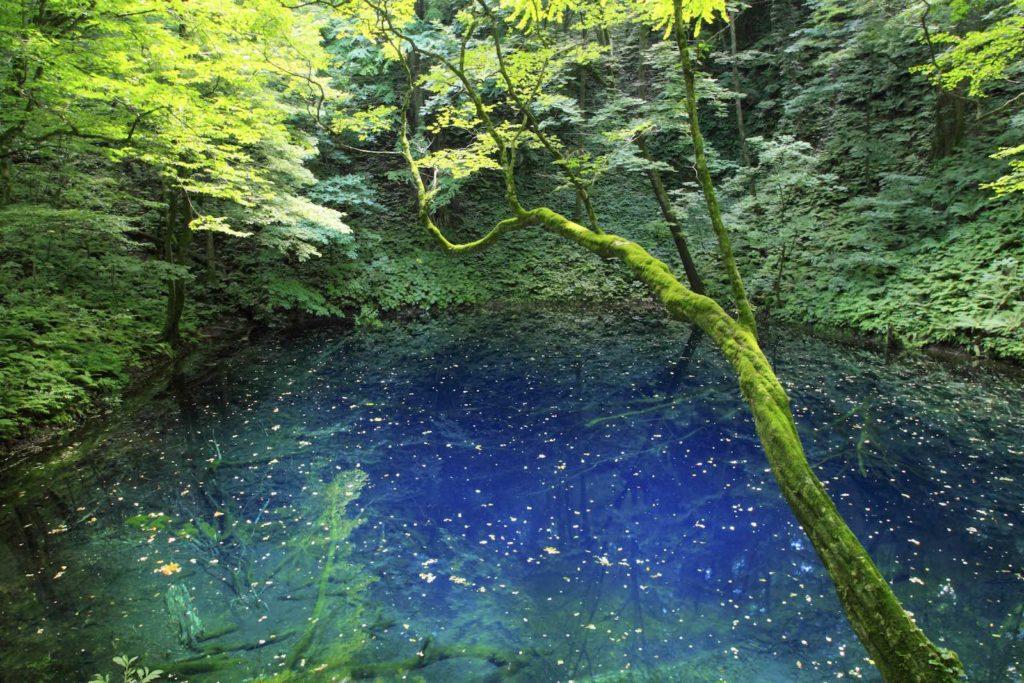 Aoike Pond, Shirakami-Sanchi in Aomori Prefecture
