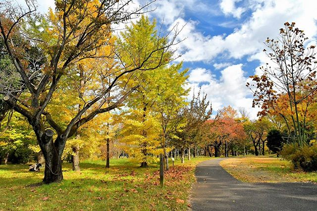 Musashino Park.