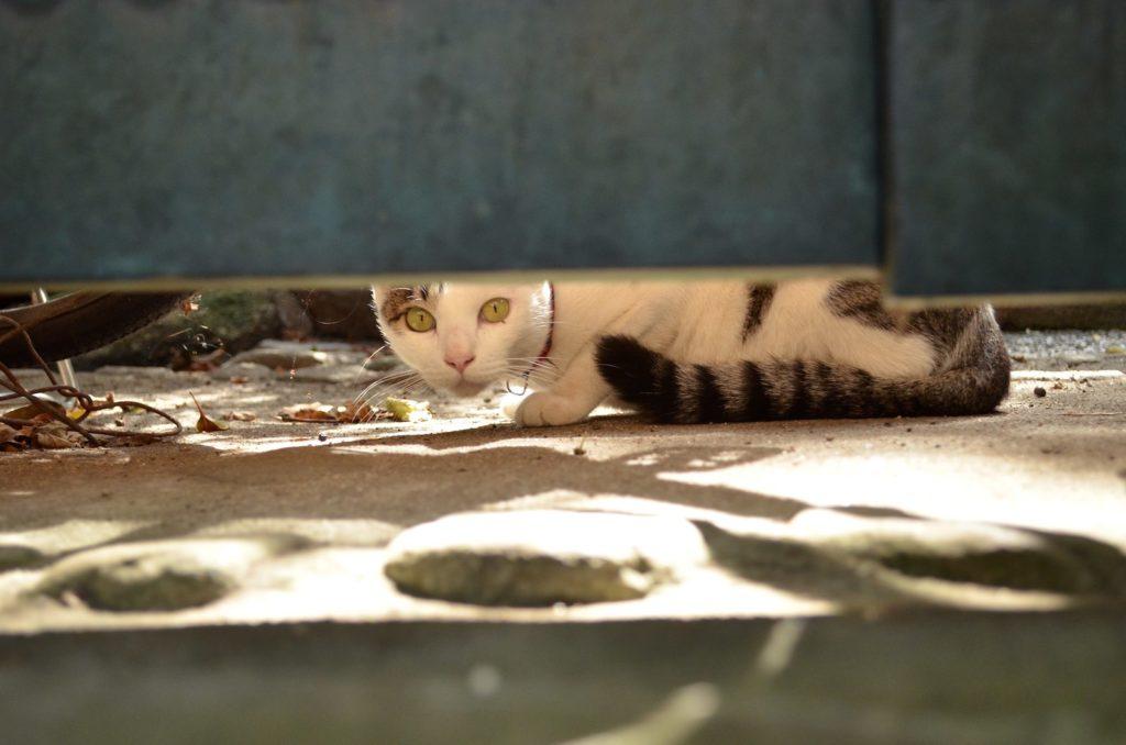 Cat in Onomichi