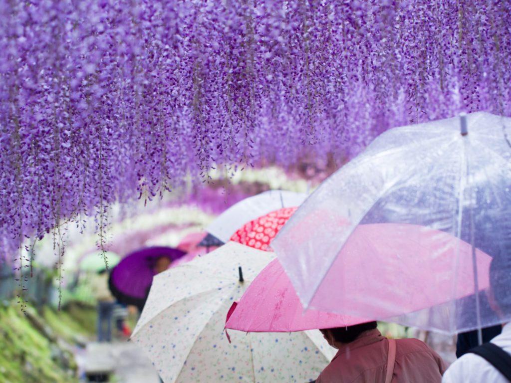 Kitakyushu Kawachi Wisteria Garden