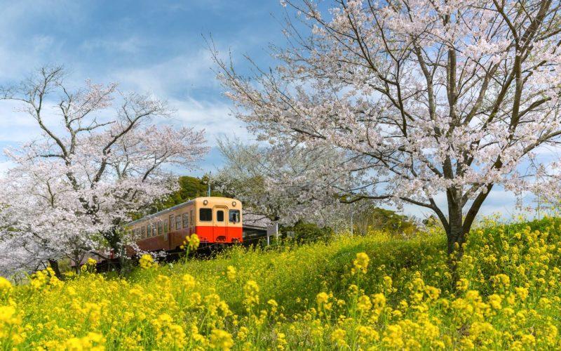 616ebdc062b0 Itinerary: Ride the Kominato and Isumi Train Lines of Chiba ...