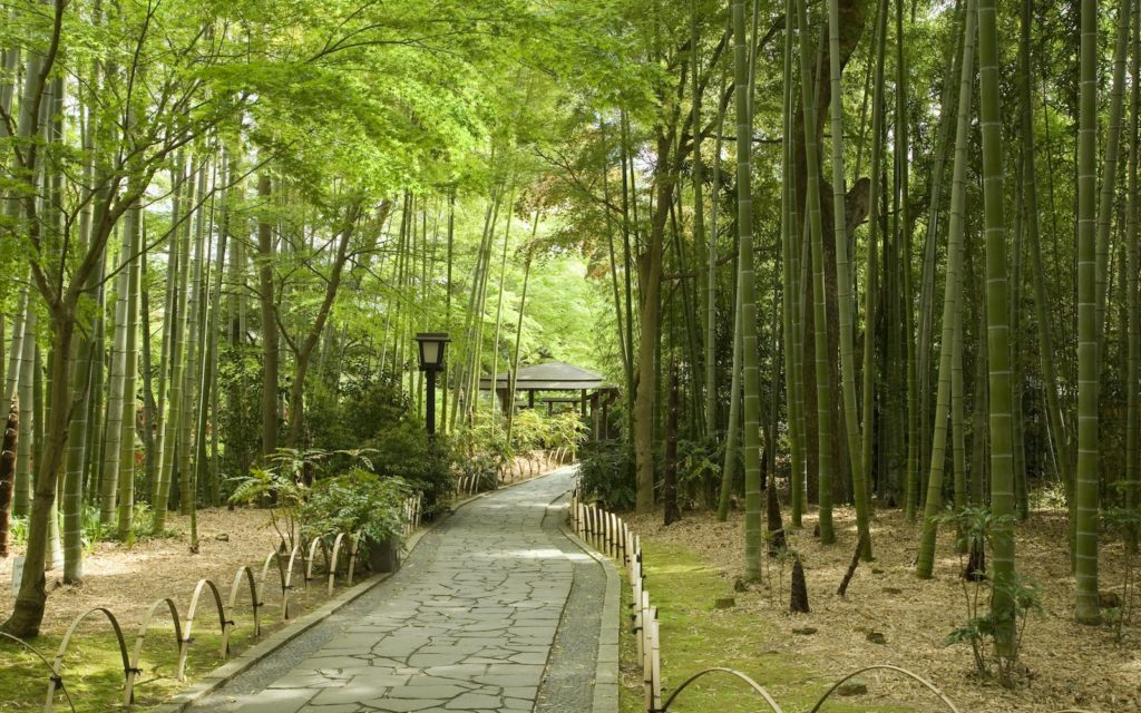 Shuzenji's peaceful bamboo grove.