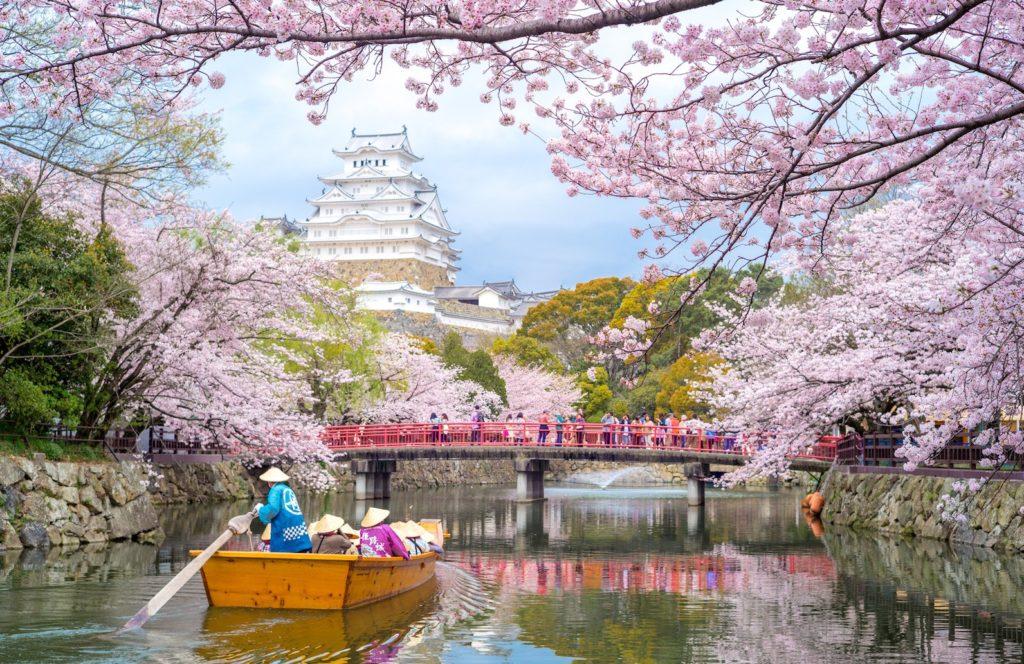 Himeji Castle in Hyogo, Japan during cherry blossom season