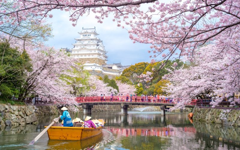 Himeji Castle in Hyogo, Japan during cherry blossom season