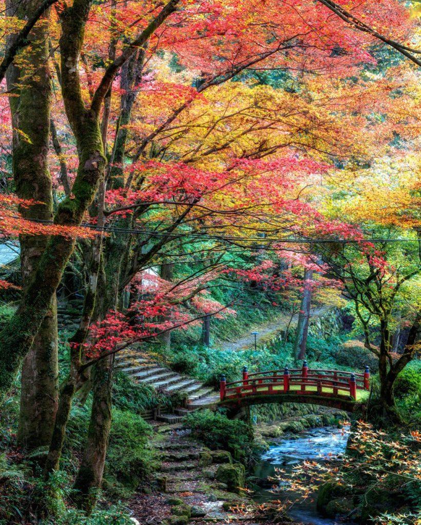 Yokokura Temple Autumn leaves gifu