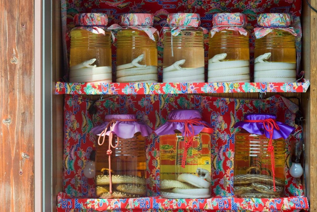 Habu-snake-from-Okinawa-in-awamorii