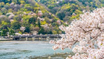 Blossoms over the river — an iconic scene not too far from Arashiyama Station.