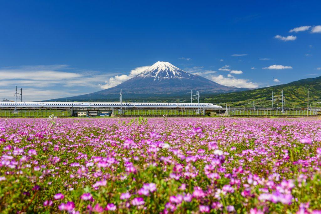 Japan Bullet Train GaijinPot Sakura Contest 2019