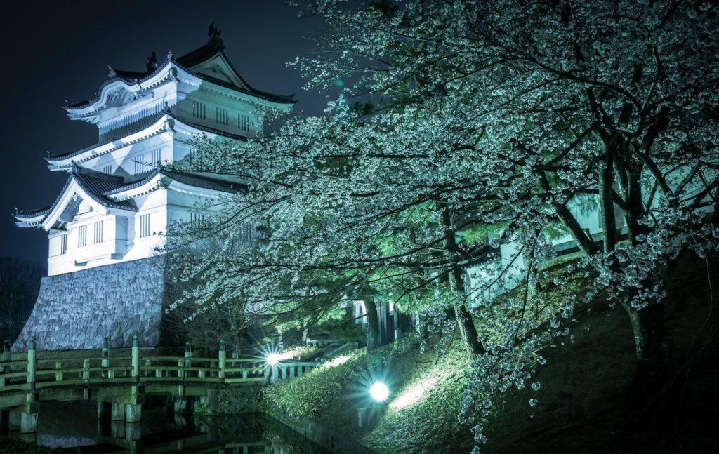 Oshi Castle Sakura