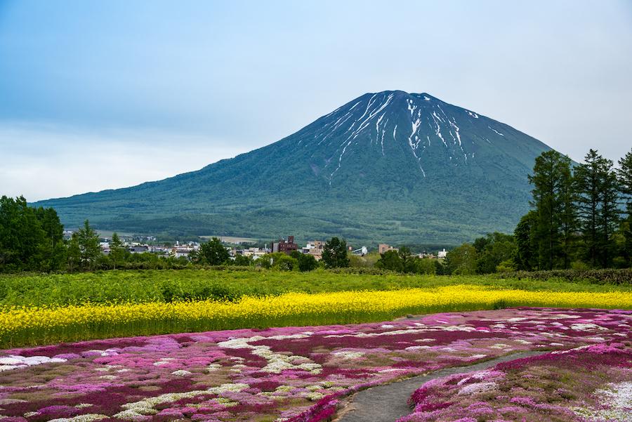 Sibazakura garden in Niseko, Hokkaido