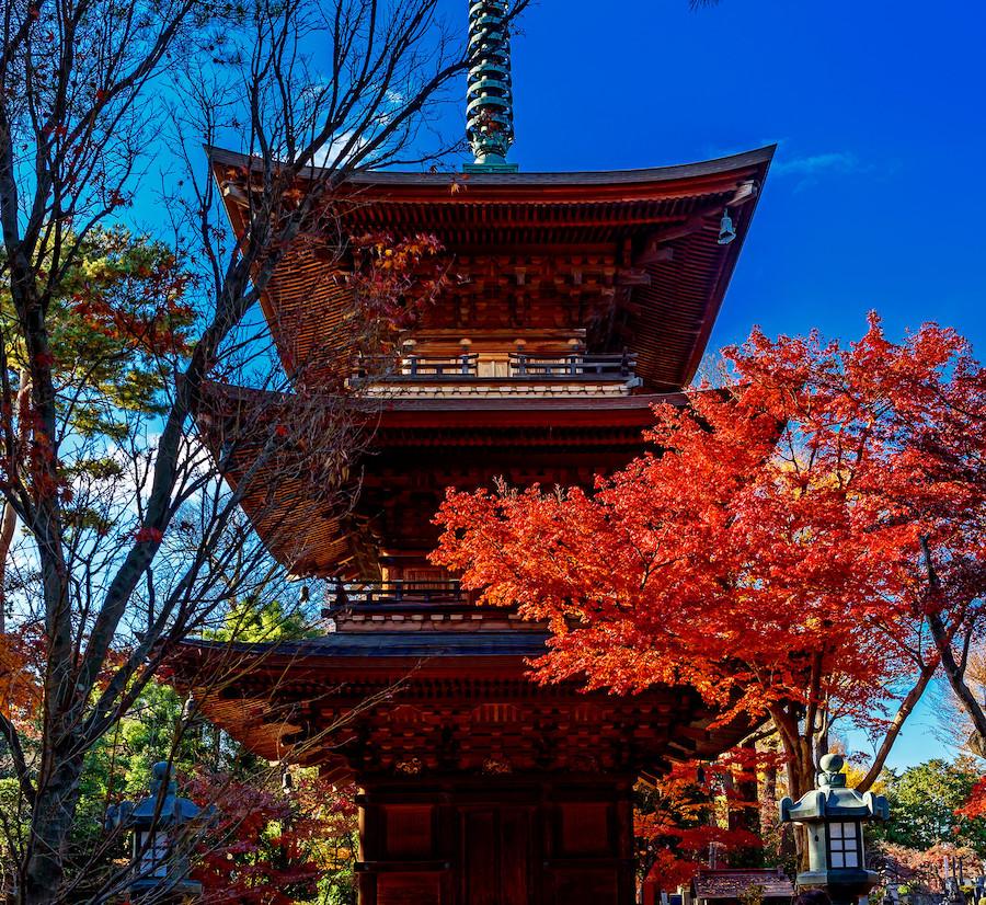 Gotokuji Cat Temple Setagaya Tokyo