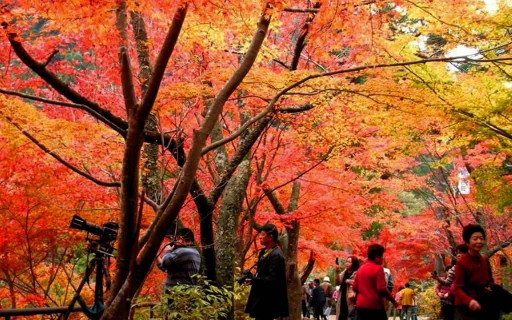 Best places to see autumn leaves in Chugoku Okutsu Valley Kamino Town