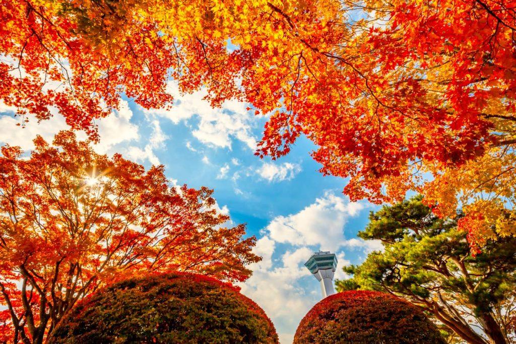 Goryokaku Park Hakodate Autumn Leaves