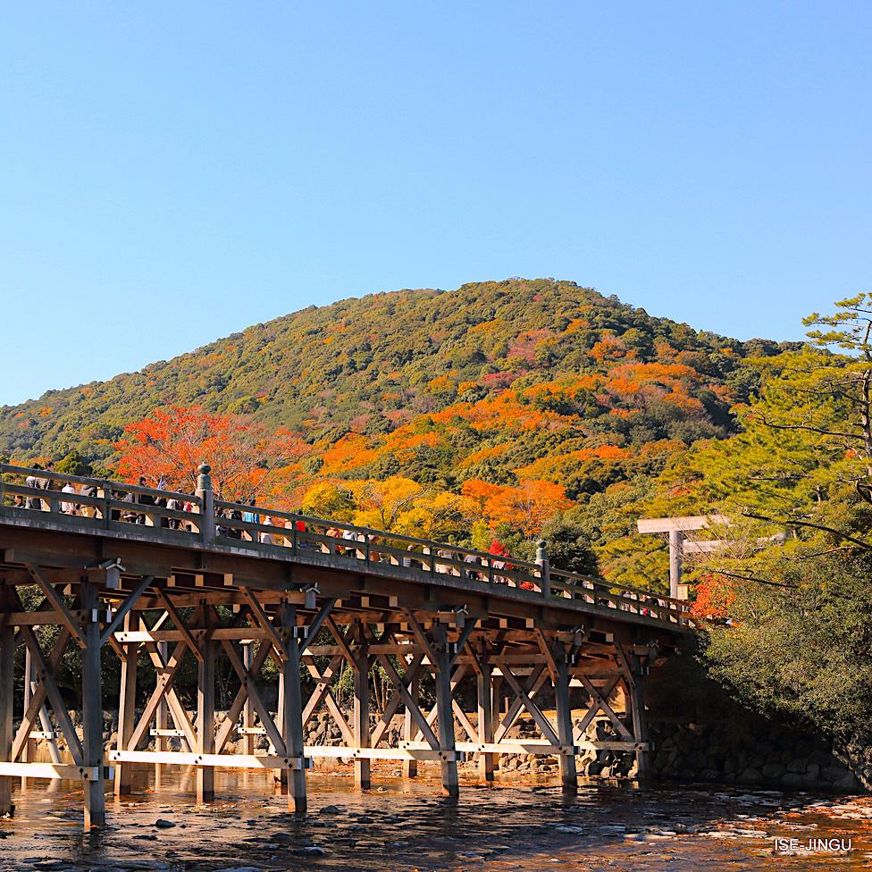 Ise Jingu Shrine Autumn Leaves