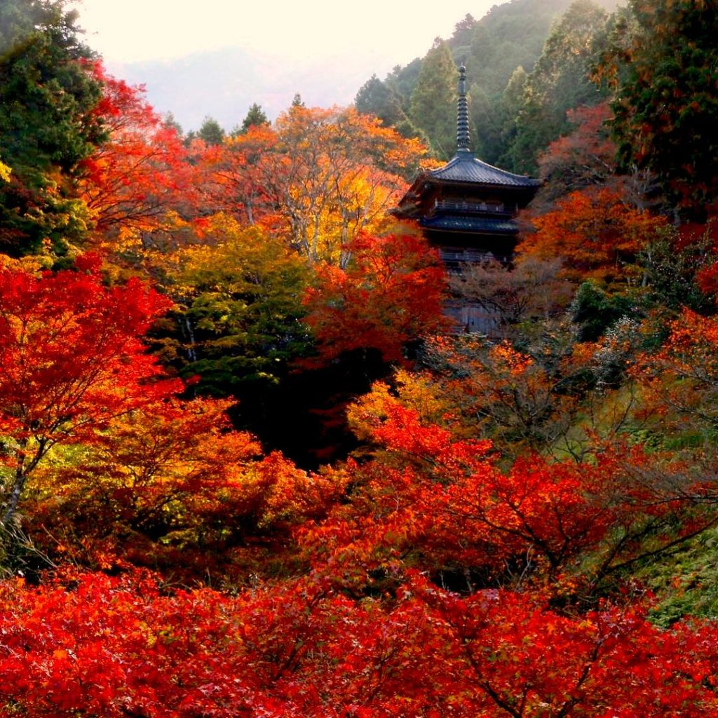 Kogenji Temple Koyo Hyogo