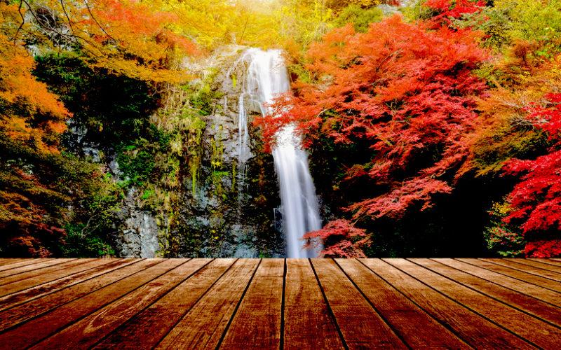 Mino Park Autumn Leaves Osaka