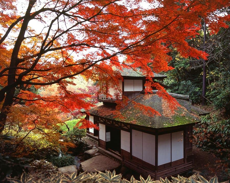 Sankeien Garden Yokohama Autumn