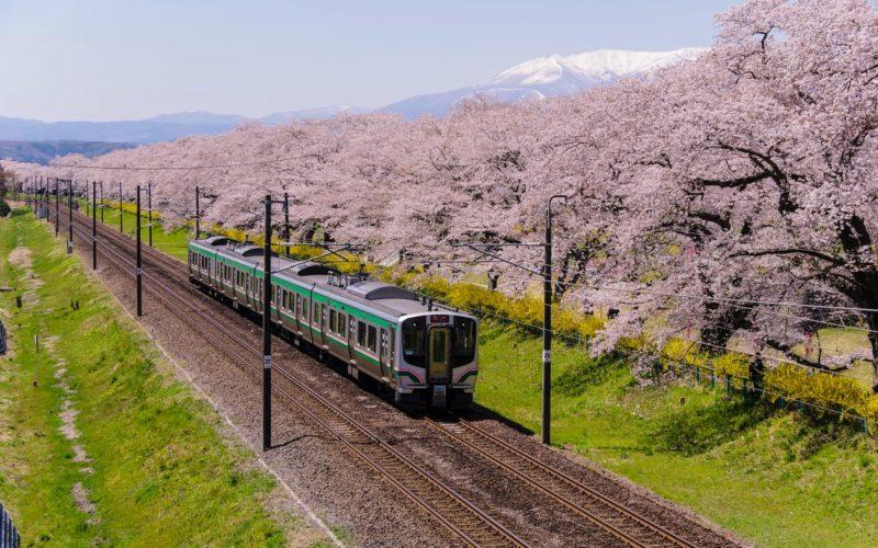 Hitome Senbon Zakura in Miyagi, Japan.