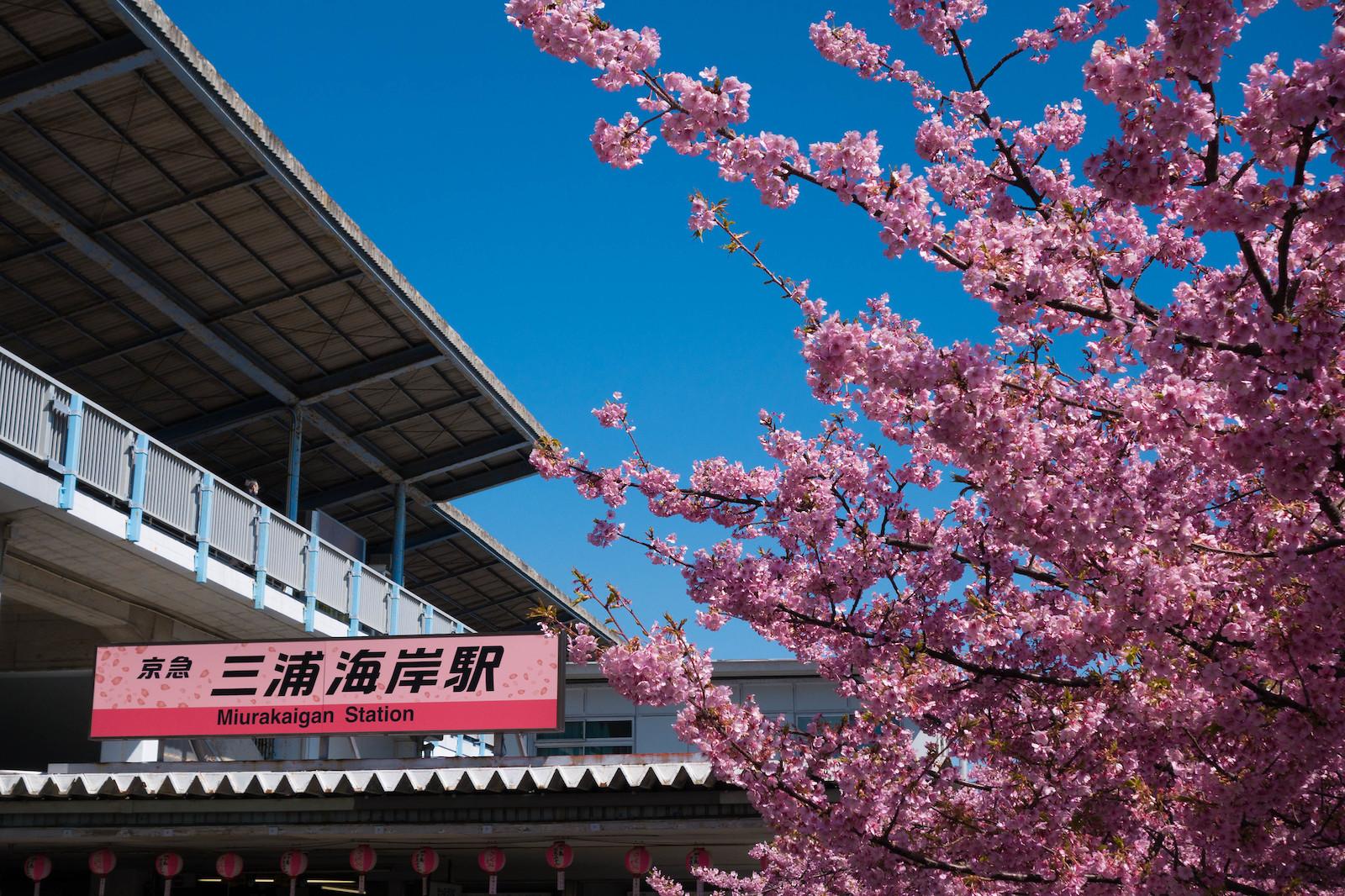 Cherry Blossom Festival Gift Shop