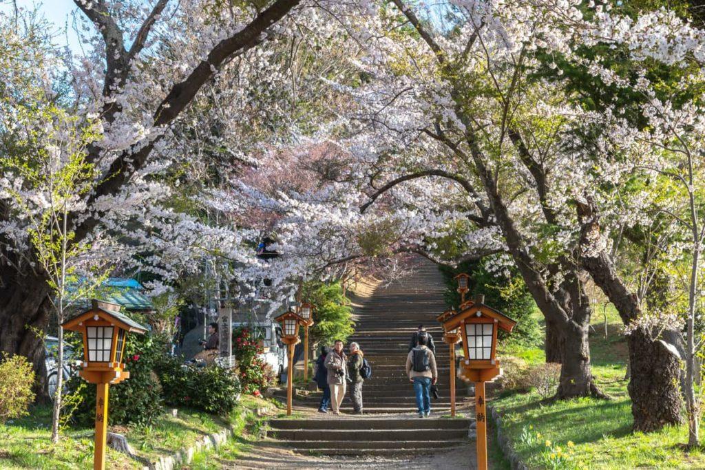 Chureito Pagoda in Yamanashi, Japan.