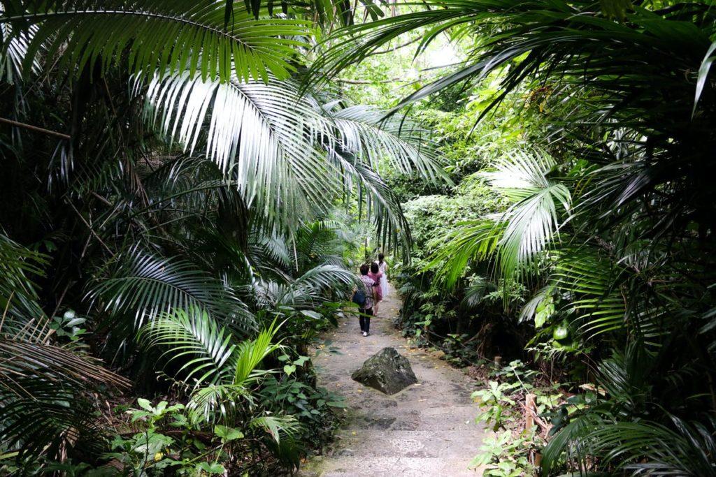 Yonehara native forest Ishigaki Island Okinawa