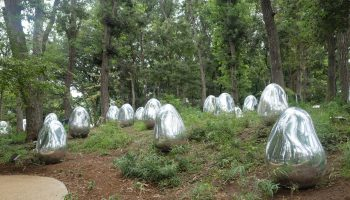 TeamLab: Resonating Life in the Acorn Forest